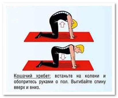упражнение кошачий хребет