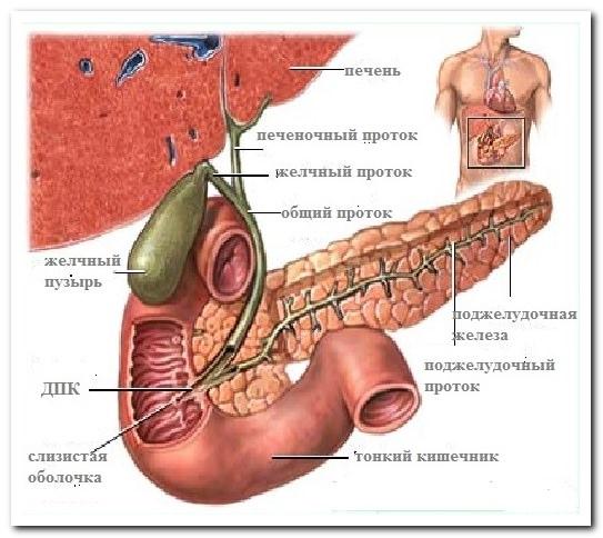 Болит позвоночник и ребра
