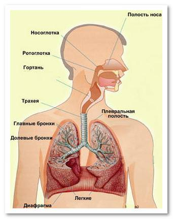 Корсеты при остеохондрозе плеча