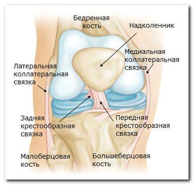 Что такое мрт коленого сустава?