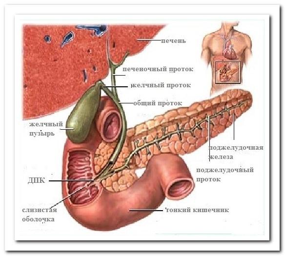 боли в спине лежа из-за органов
