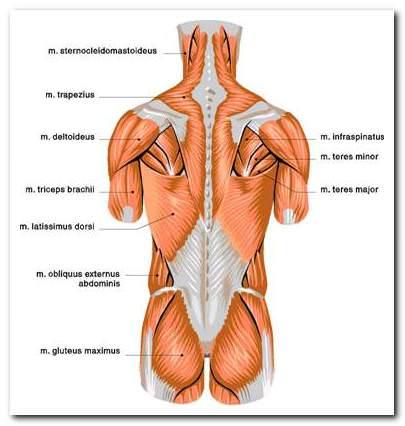 защитные спазмы мышц при мбс