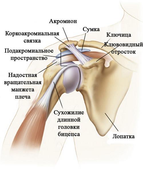 Сращивание сухожилий плечевого сустава анестезия при артроскопии коленного сустава отзывы