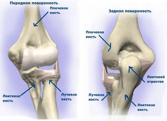Изображение - Хирургия локтевого сустава loktevoy_sustav
