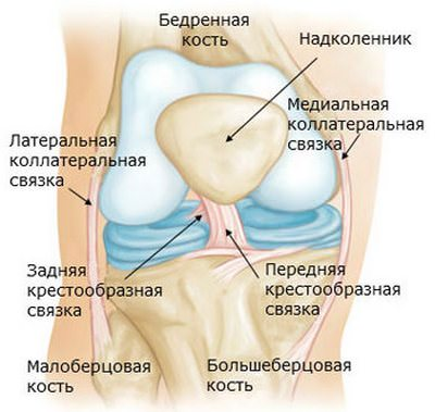 Связка коленного сустава после операции лечение