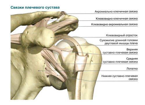 связки плеча