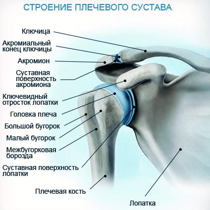 Лечится ли артрит ключично-плечевого сустава лечение атрофии сустава