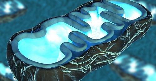 этиология синдрома рея