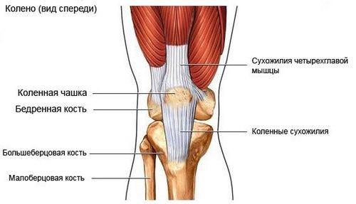 Лечение тендинита коленного сустава суставчатый цветок