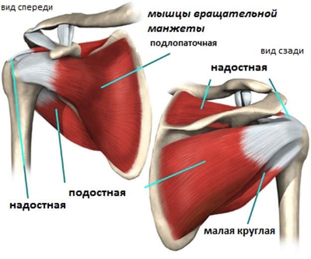 Тендинит сухожилия плечевого сустава как лечить фиксация лучезапястного сустава orlett flex