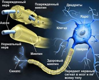Как восстановить нейронные связи