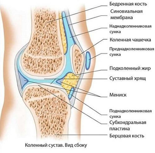 Терафлекс при синовите коленного сустава