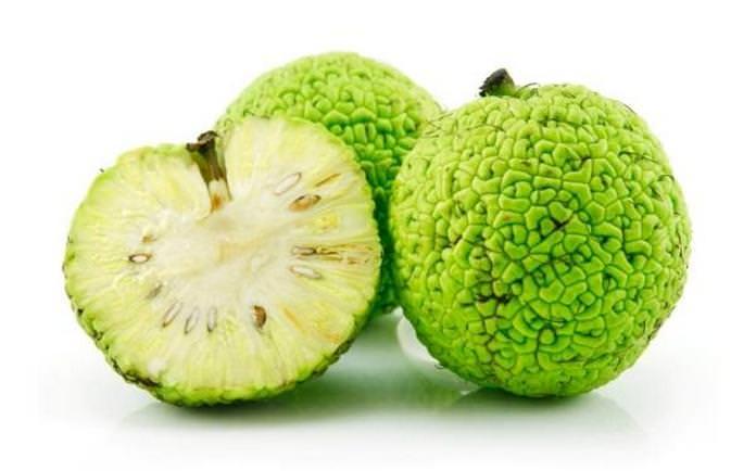 Адамово яблоко в народной медицине: применение в лечении суставов