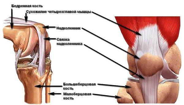 Боль возникает при сгибании коленного сустава мазь для суставов лошадей