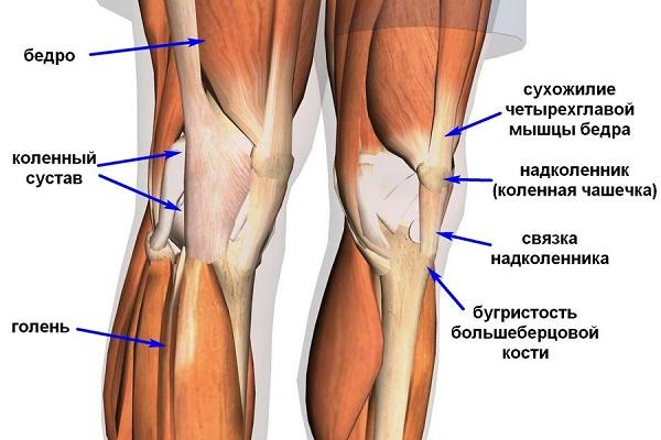 Болит над коленом при сгибании узи тазобедренного сустава великий новгород