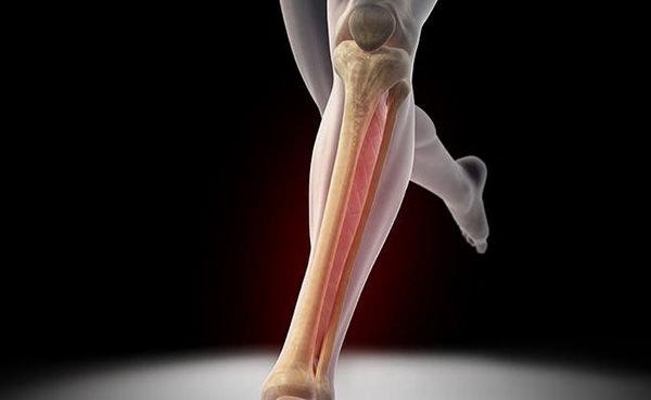 Строение большеберцовой кости человека и где она находится причины болей и методы лечения