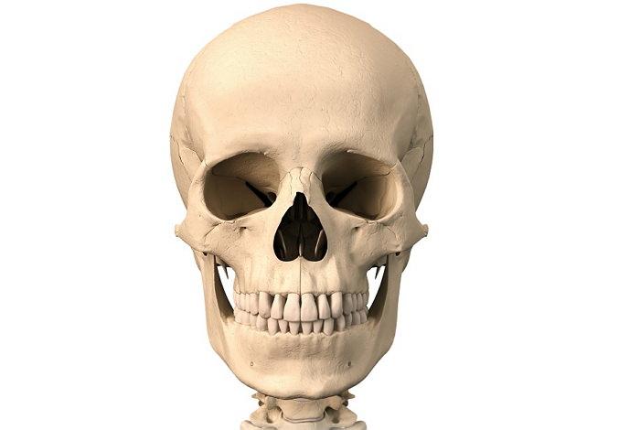Анатомия: Внутреннее основание черепа (basis cranii interna)