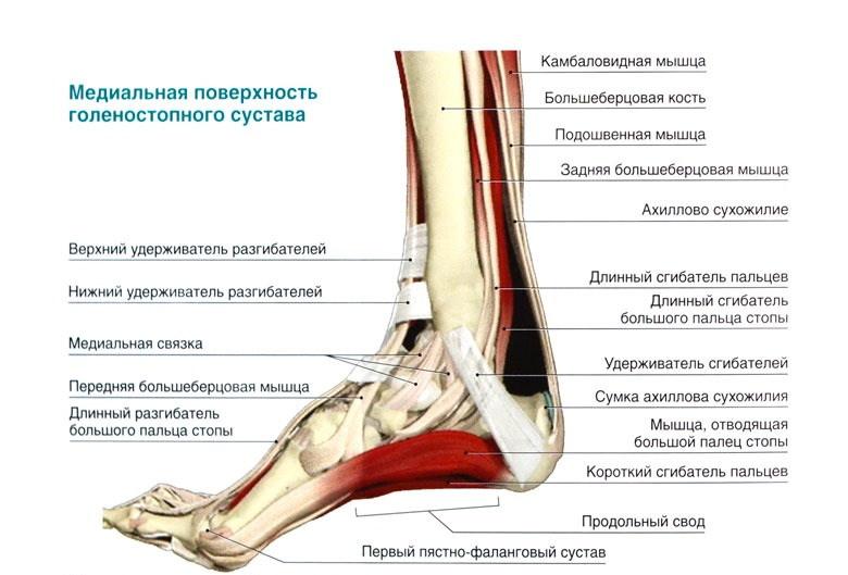 Нарушение функции голеностопного сустава лечение суставов в санаториях чувашии