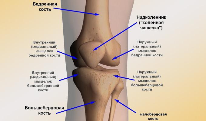 устройство суставов человека