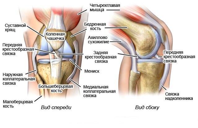 Суставная капсула коленного сустава тонкая какие движения осуществляются в локтевом суставе