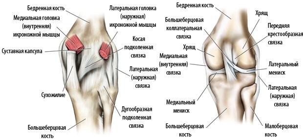 Бедро вблизи коленного сустава ревматизм суставов у беременных