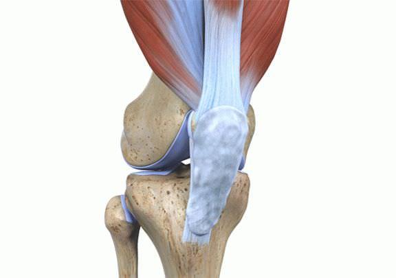 Чем образован коленный сустав - Лечение Суставов