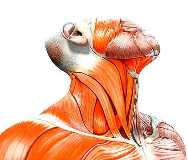 Мышечная кривошея: причины, симптомы и лечение в статье ортопеда Сорокина Е. А.