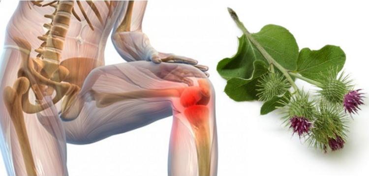 Как лечить суставы лопухом кости суставы и мышцы кисти