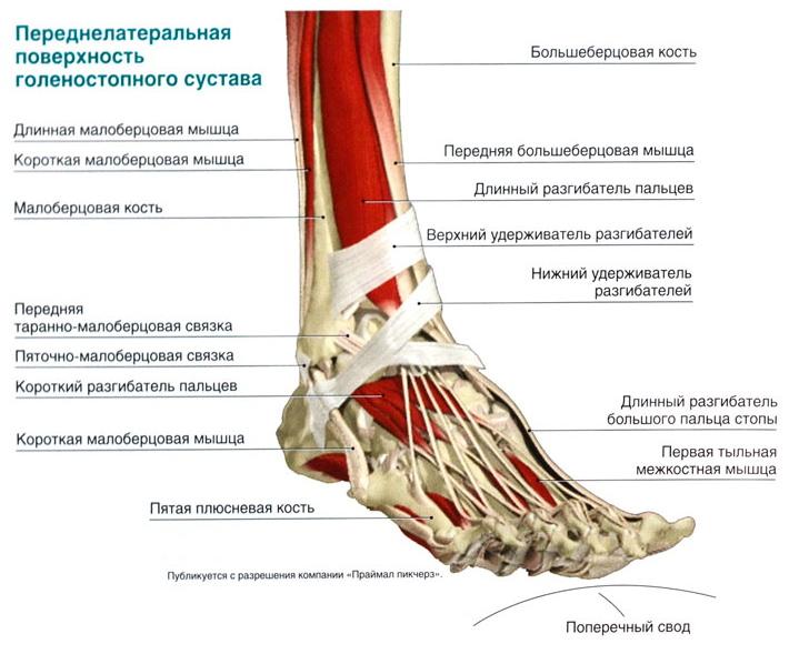 Повреждение связок голеностопного сустава с отколом таранной кости донна бальзам для суставов