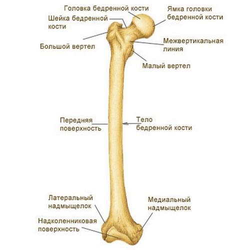 Открытый перелом бедренной кости