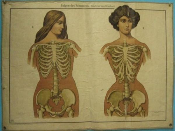 Сколько ребер у мужчины и женщины анатомия. Как устроена грудная клетка и больше ли ребер у мужчин