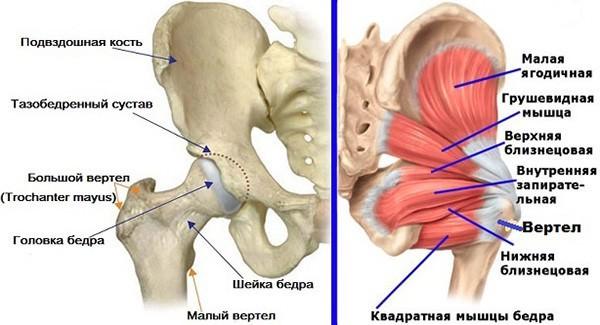 Трохантерит тазобедренного сустава какой врач лечит внутри суставной головки находиться